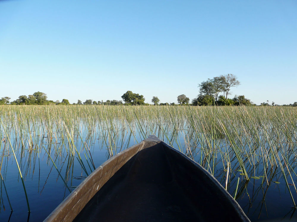Africa Beauty In Nature Blue Botswana Clear Sky Day Grass Growth Landscape Mokoro Nature No People Okavango Delta Outdoors Plant Scenics Serene Outdoors Serenity Sky Solitude Tranquil Scene Tranquility Tree Water Travel EyeEmNewHere