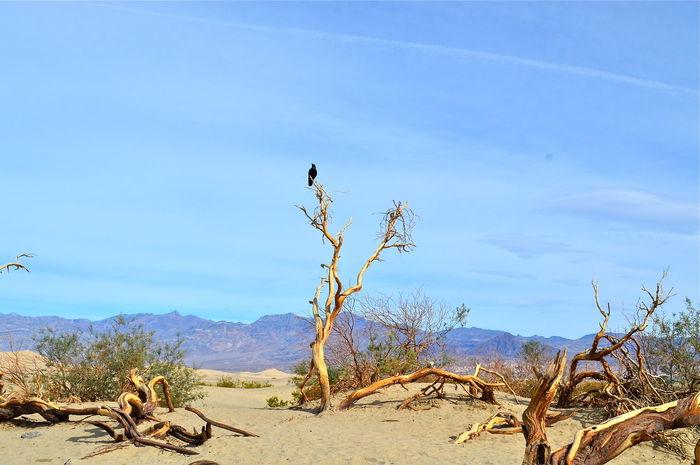 Death Valley National Park Bird Desert Sand Travel Destinations Travel Photography Explore Exploring EyeEmNewHere