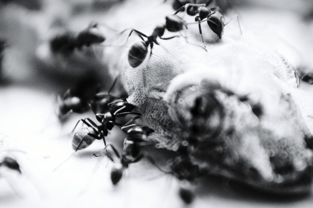 Insect Ants Close Up Death Lizard Life And Death In Nature Recycling Macro Photography EyeEm Nature Lover Nikon D5100  Low Angle View Black & White