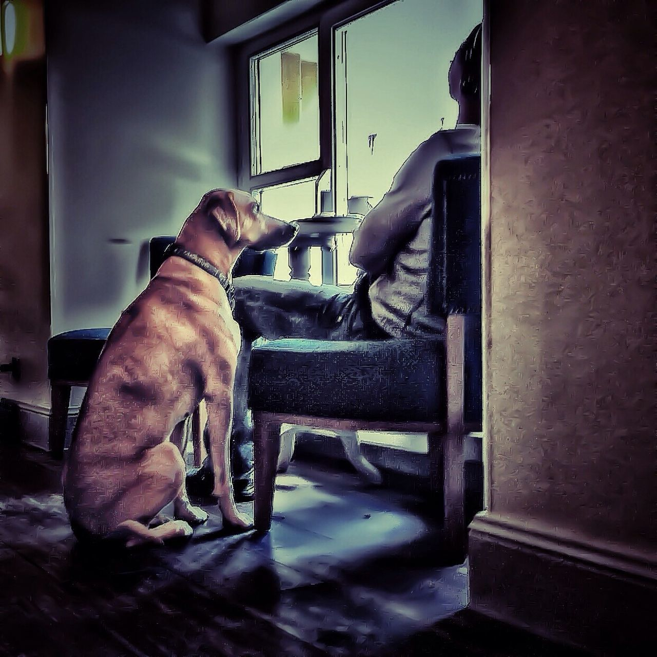 pets, domestic animals, dog, mammal, animal themes, one animal, indoors, no people, full length, day, close-up