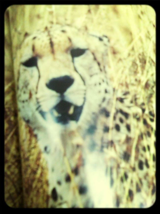 האריה שליי.. חח