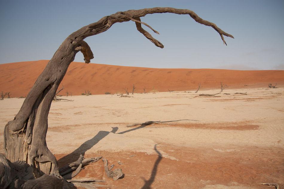 Beautiful stock photos of desert, Arid Climate, Bare Tree, Day, Desert