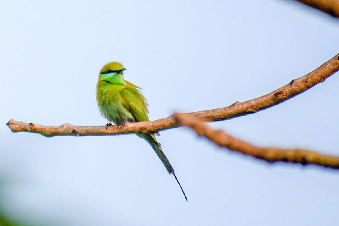 Nature Beauty In Nature Green Bee-eater Bird Eye Em Nature Lover Birds Of EyeEm  Bird Photography Nature