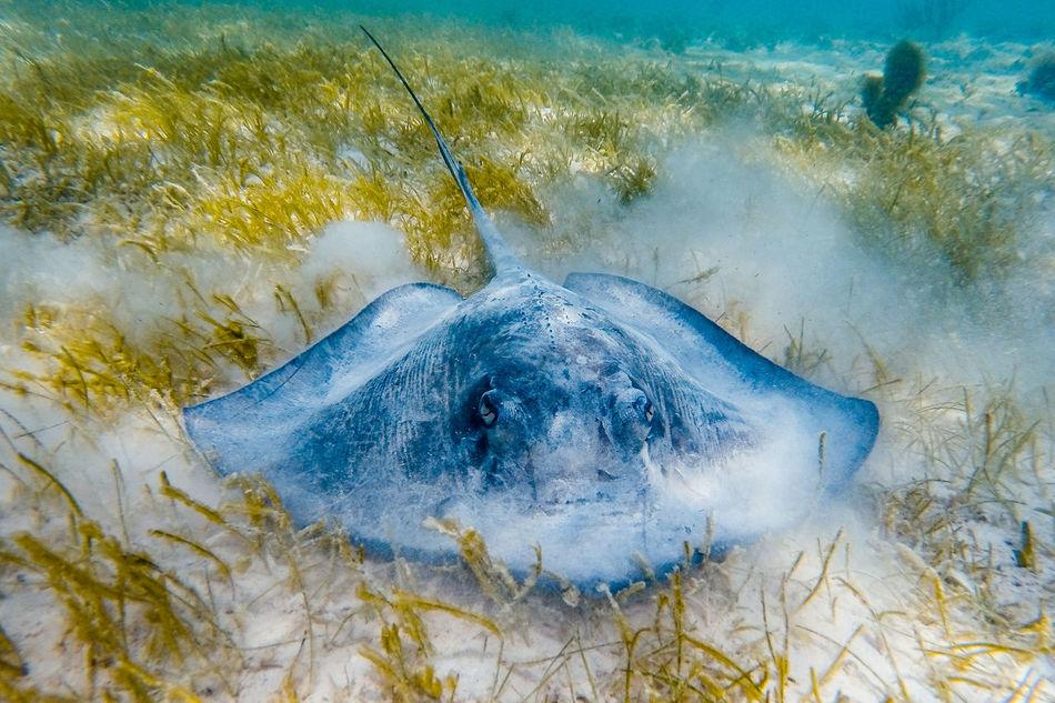 Beautiful stock photos of underwater, Animal Themes, Animal Wildlife, Animals In The Wild, Mexico