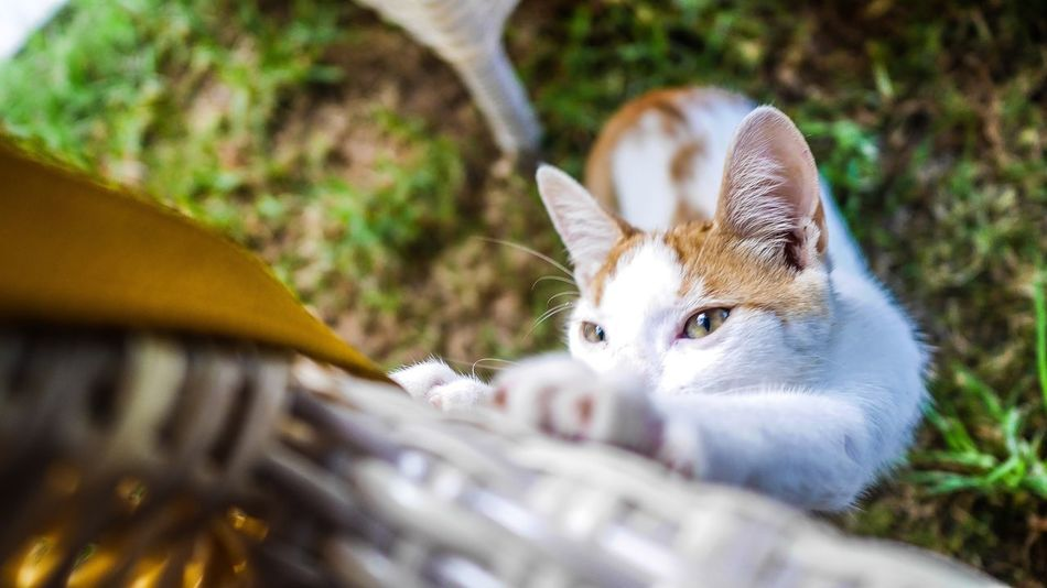 Beautiful stock photos of cat, Animal Themes, Cat, Chair, Day