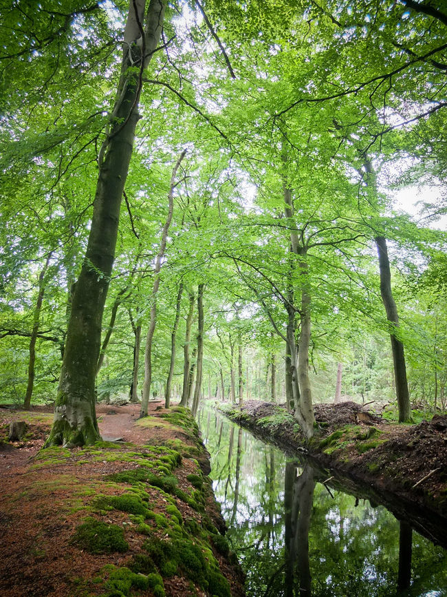 Forest Beauty In Nature Forest Friesland Gaasterland Green Color Idyllic Nature No People Reflection Rijsterbos Rijswijk Spring Tranquil Scene Tranquility Tree WoodLand First Eyeem Photo