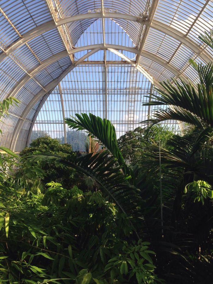 Greenhouse Ceiling Botany Botanical Garden Plant Kew Greenhouse Plants PalmsTrees