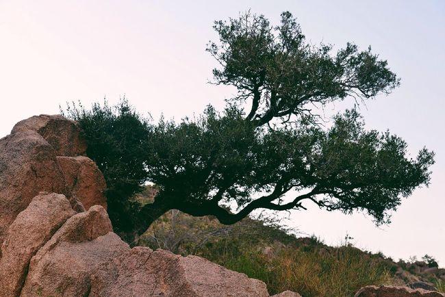 EyeEm Nature Lover TreePorn Nature_collection VSCO