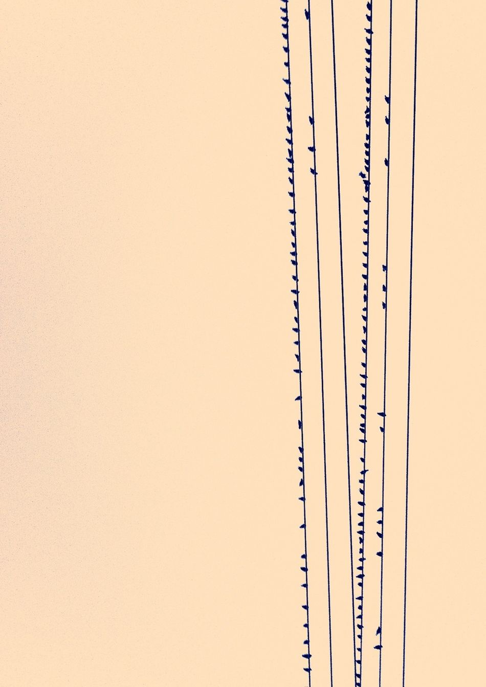 Minimalism The Minimals (less Edit Juxt Photography) Minimalobsession Birds On A Wire