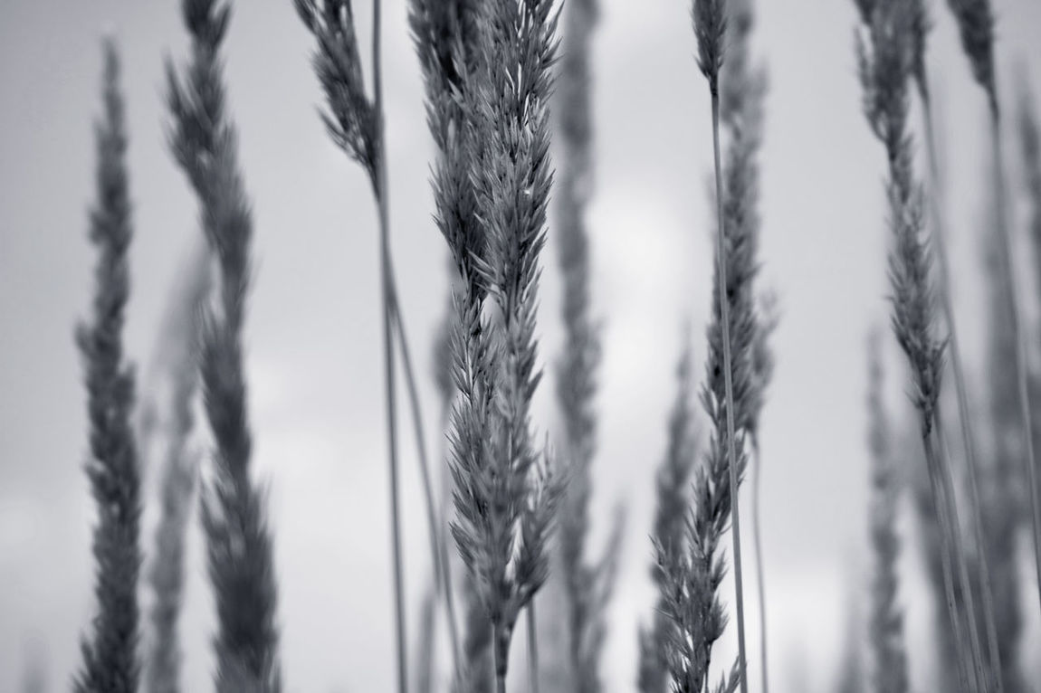 EyeEmNewHere Nature Dslrphotography Prints Patterns Grasses Grass Running Pictue Perfect Outdoors Freshness Atmosphere Photography Abstract Trees Beauty In Nature Mood Dof Grey Blackandwhite Art Image Love Summer Hazy