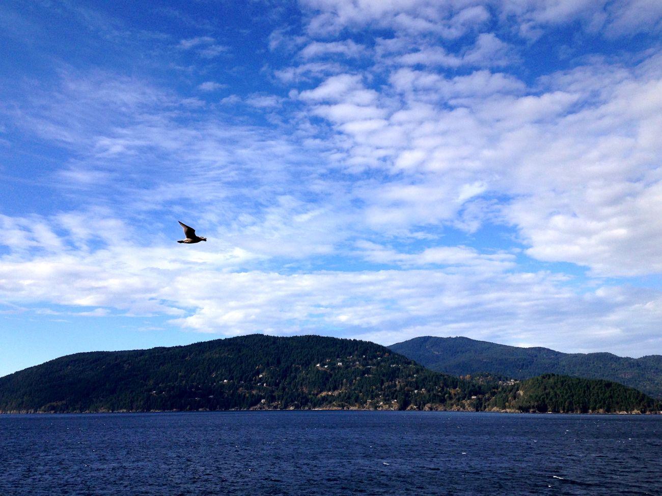 Sky Ocean Island Bird Flyingbird Nature Landscape Scenery Whytecliff Park Canada