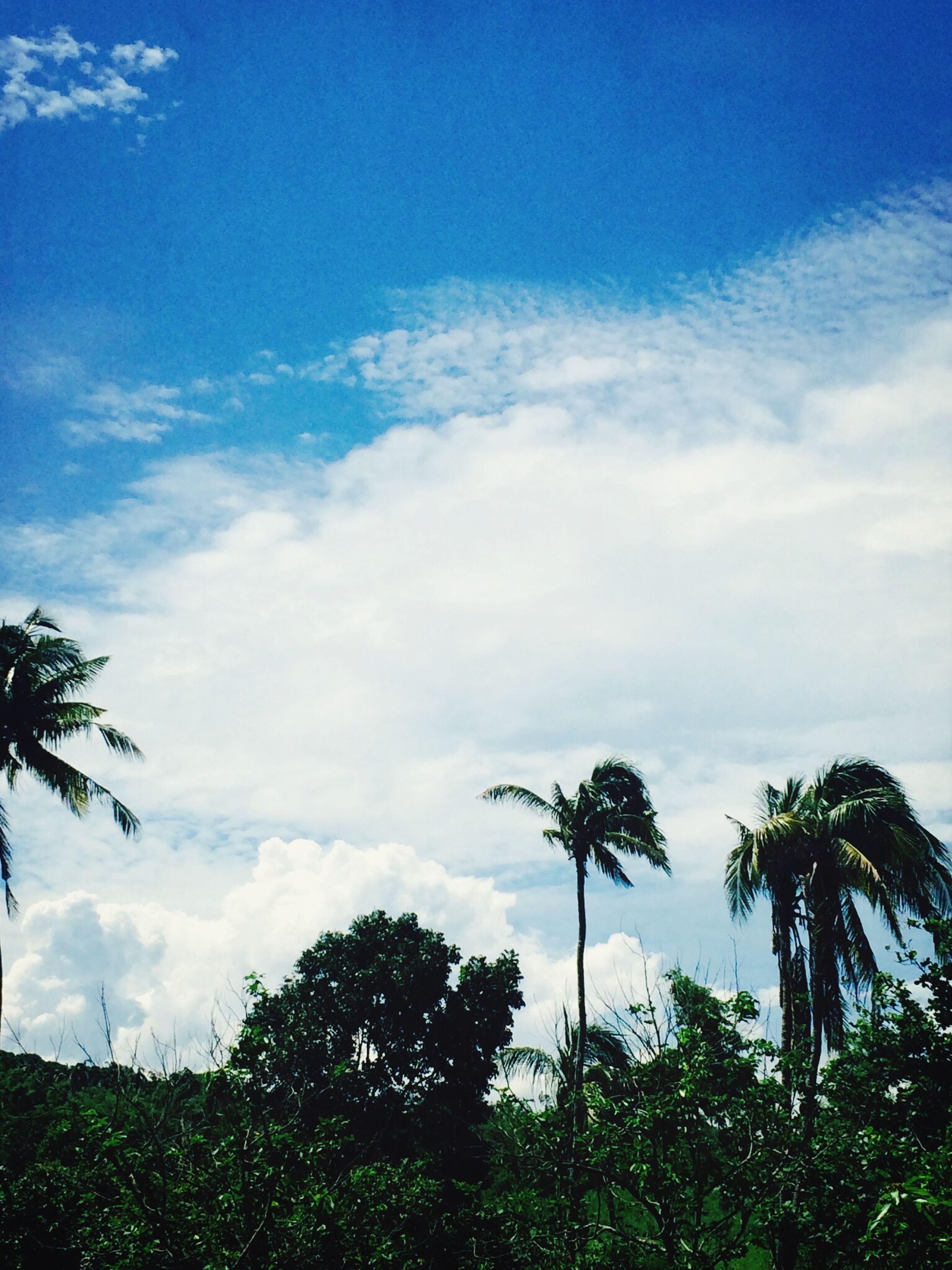 palm tree, tree, low angle view, sky, growth, tranquility, cloud - sky, beauty in nature, nature, blue, cloud, scenics, tree trunk, tranquil scene, silhouette, coconut palm tree, cloudy, tall - high, no people, branch