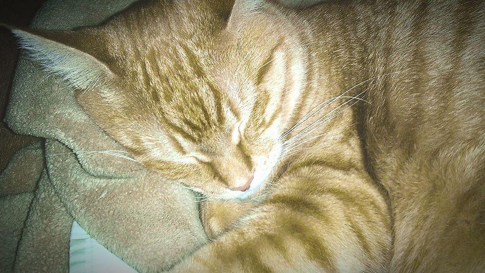 Sleepy kitty.... Cat EyeEmAnimalLover EyeEm Best Shots Manx Cat Orange Yellowcat Tabby Kitty Sleepingkitty Sleeping Cat Backgrounds Indoors  Crumpled Textured  Textile Full Frame No People Close-up Animal Themes EyeEm Ready   EyeEmNewHere