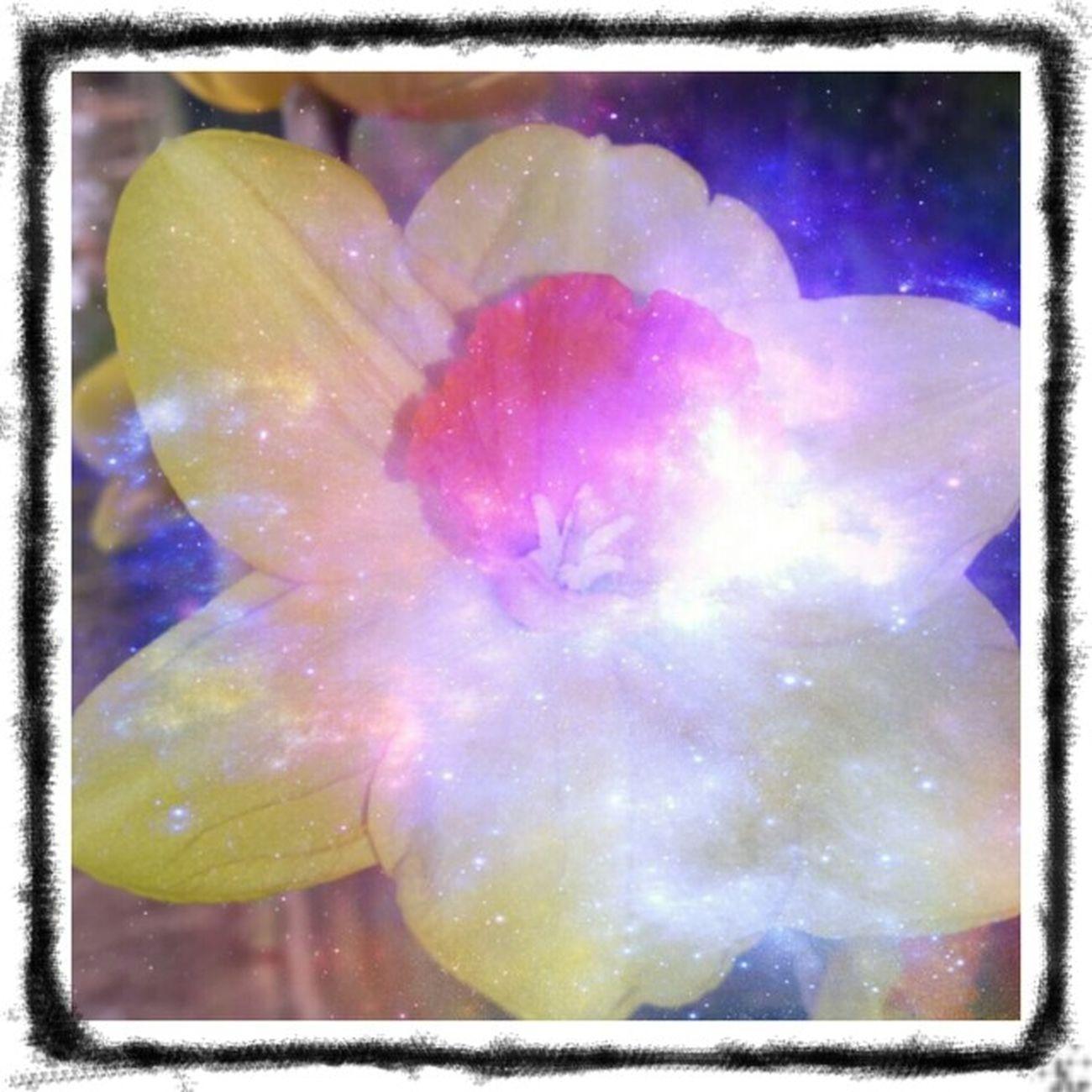 This is my thank you Flower Art Instagram #followme #follow #eyeem #awesome #streamzoo #instahub #photo #sigueme #followhim #cute #follow4follow F4f Followback [ Heartflowers Flower Power floweholic BloomingGreat flowerstream streamzooville