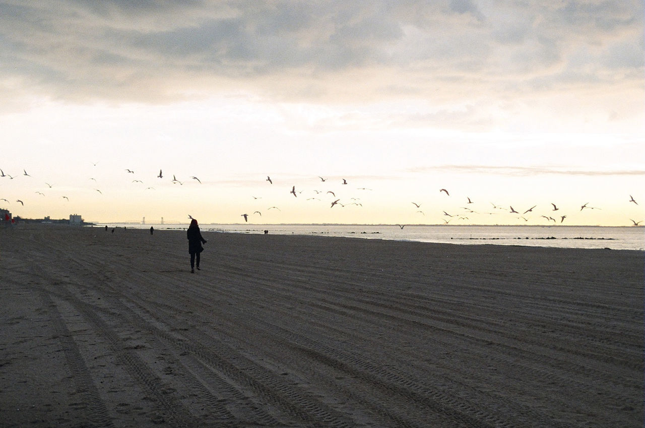 Beach Birds Cold Weather Coney Island Film Photography Flock Of Birds Freedom Horizon Over Water Lifestyles Liveauthentic Livefree Remote Scenics Sea Seagulls Seagulls And Sea Seagulls In Flight Shore Sky Sunrise Tranquil Scene Tranquility Vacations Winter Yellow Sky
