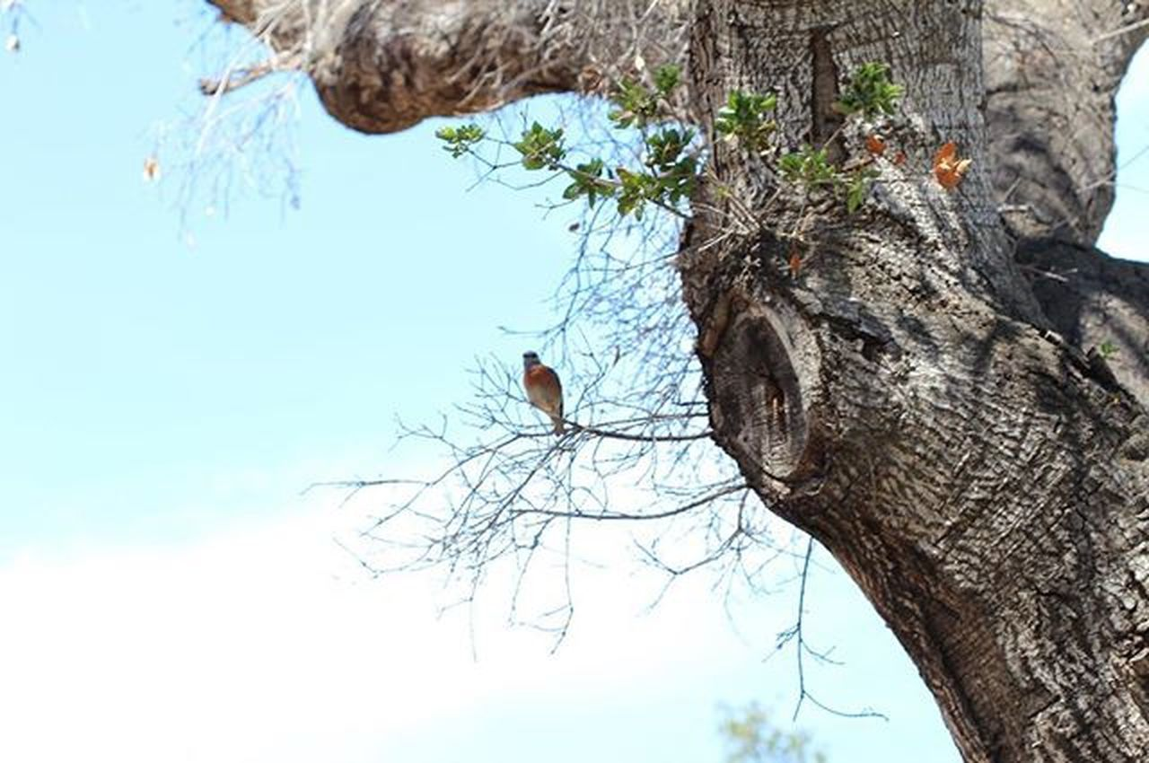 Bird Tree LakeCasitas Photography Lil bird bein trill af