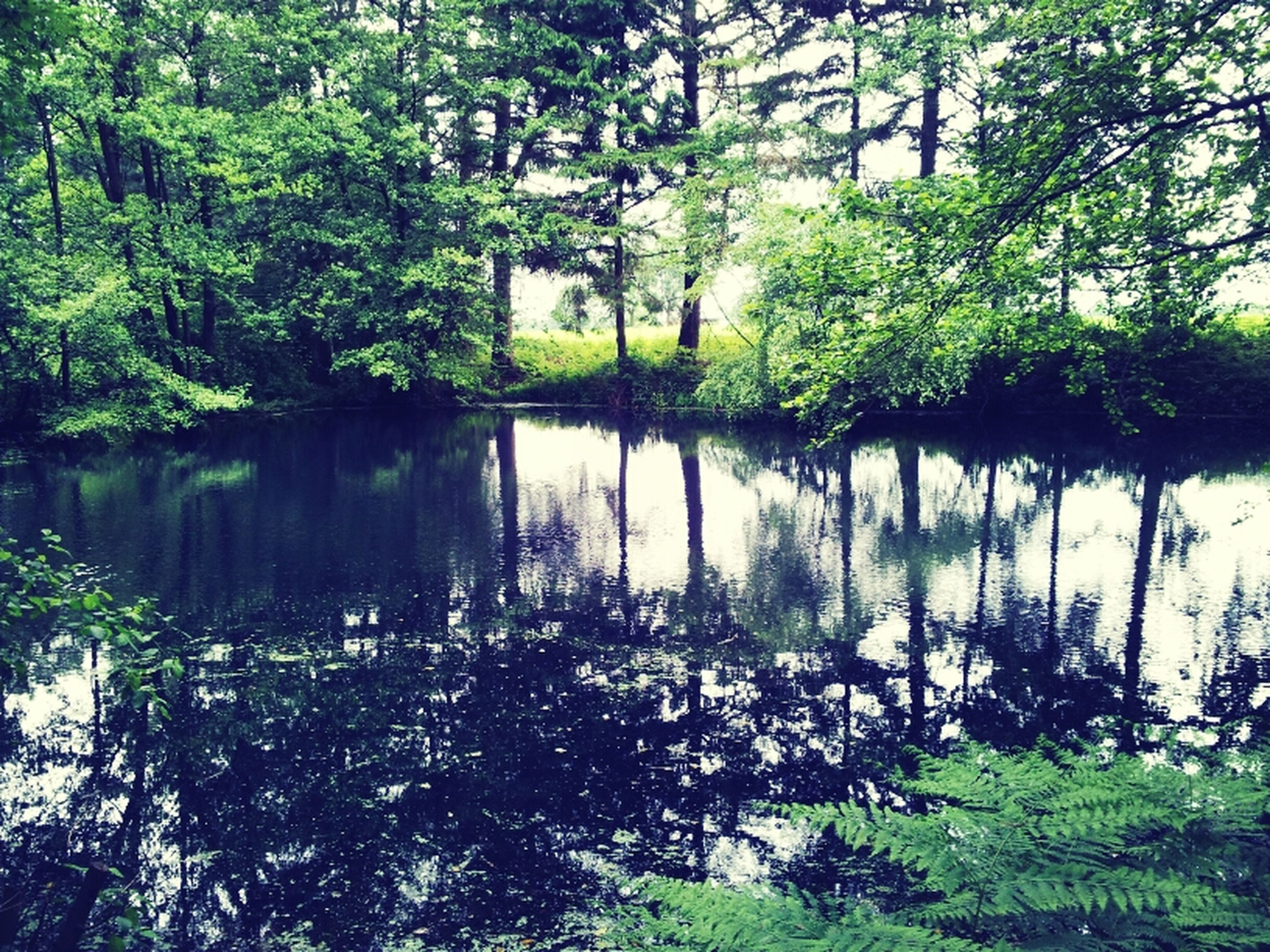 #wood #forest #summer #2012 #lake #mirroring