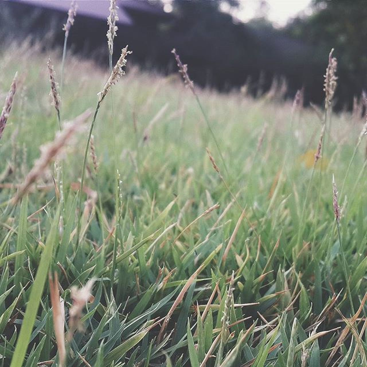 grass, growth, field, nature, day, no people, plant, outdoors, tranquility, close-up, beauty in nature, freshness