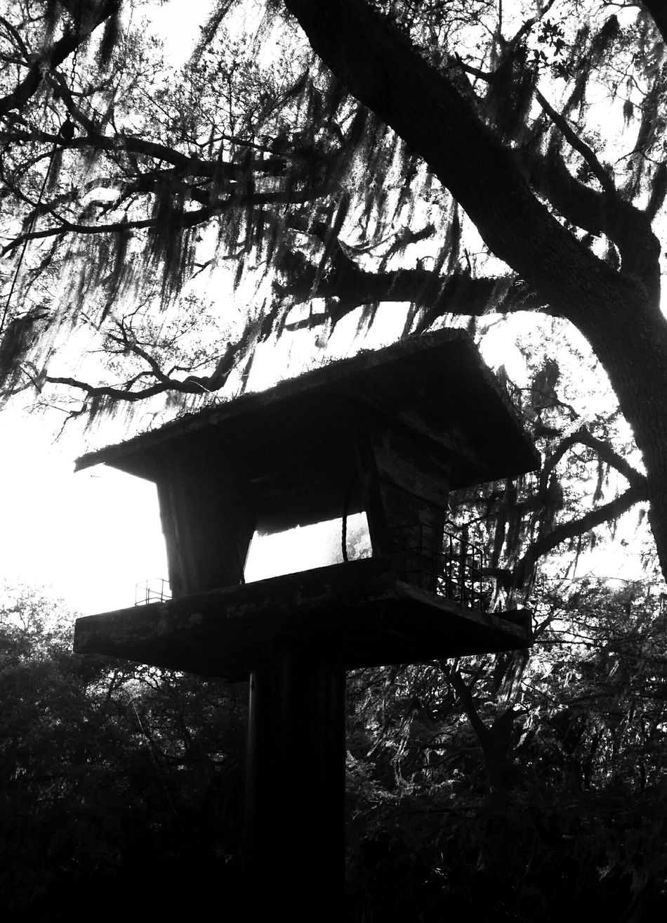 Birdhouse Old Bird House Creepy Atmoshpere Moss Mossy Tree Black And White Photography Playing With The Shadows