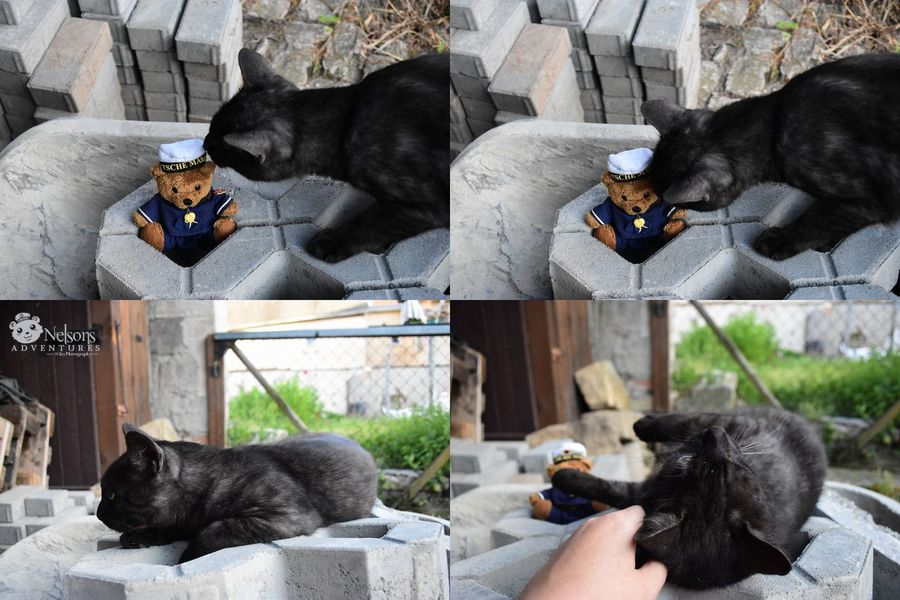 Nelson at the construction site. Outtakes. 😀 Teddy Teddy Bear NelsonsAdventures Cat CDRE Cats Black Cat Animal Feline Teddy_on_tour Close-up EyeEm Masterclass EyeEm Nature Lover Teddybear Work Construction Work Paving Funny Photo Series Pets Cute Pets Collage Summer Cute Domestic Cat Animal Themes