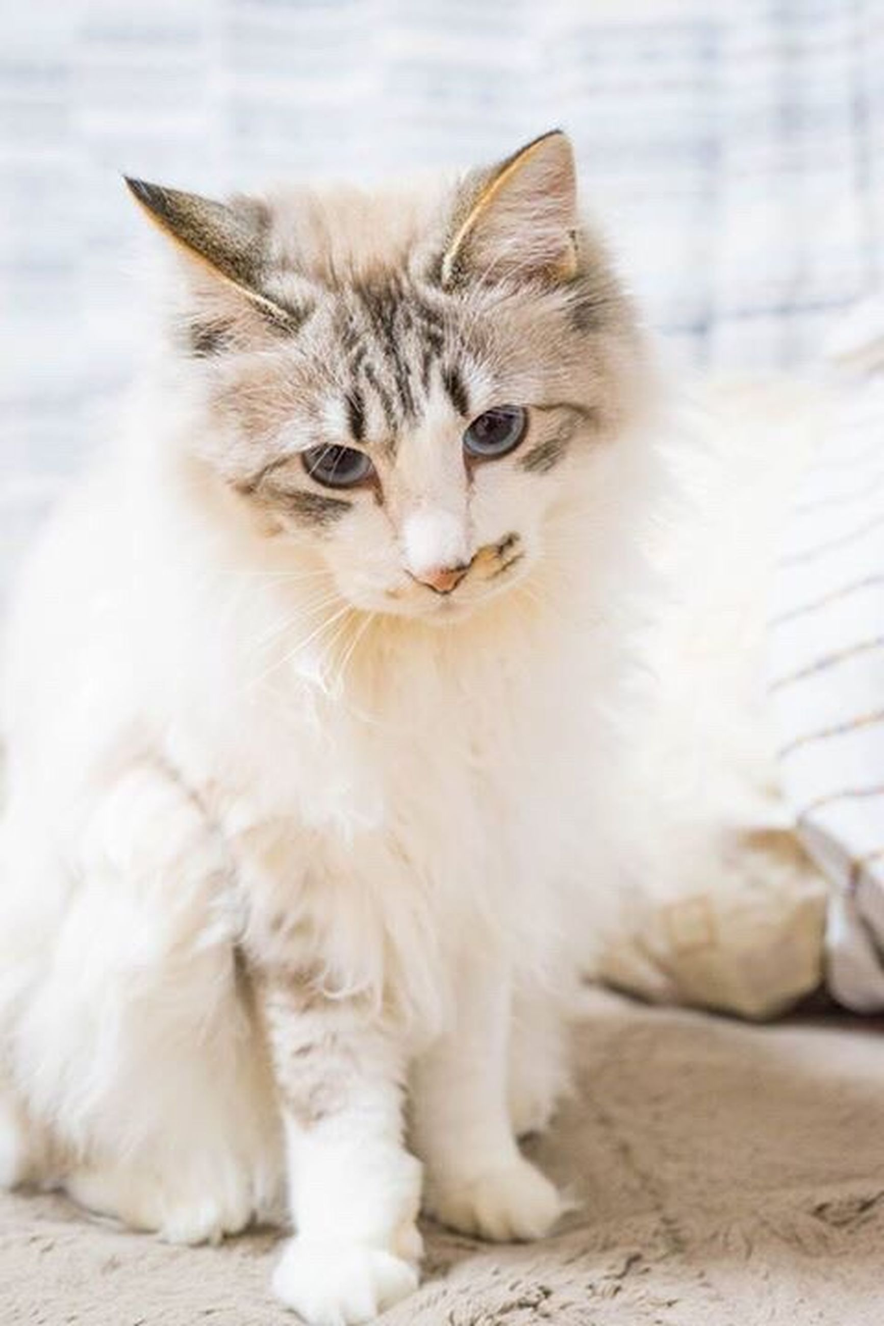 domestic cat, pets, domestic animals, animal themes, one animal, no people, mammal, feline, close-up, day, outdoors