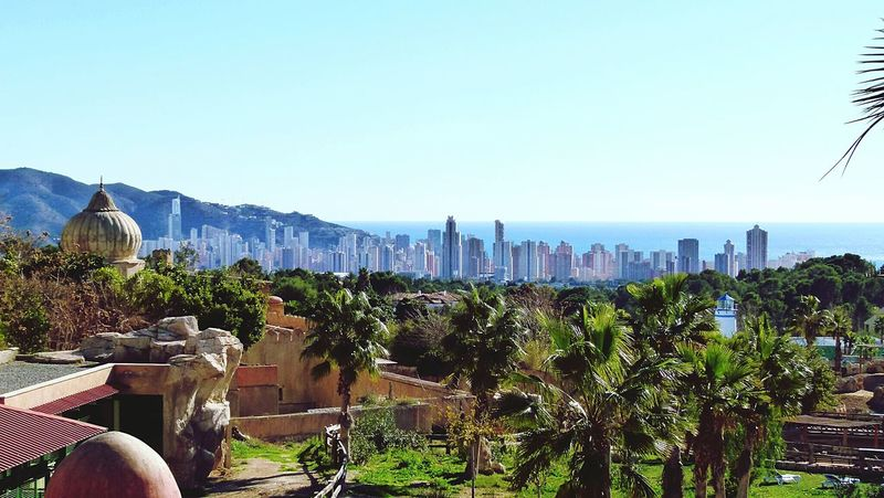 Benidorm SPAIN Buildings Architecture_collection Sea View Panoramic Flowers,Plants & Garden Apartment Buildings Cityscape