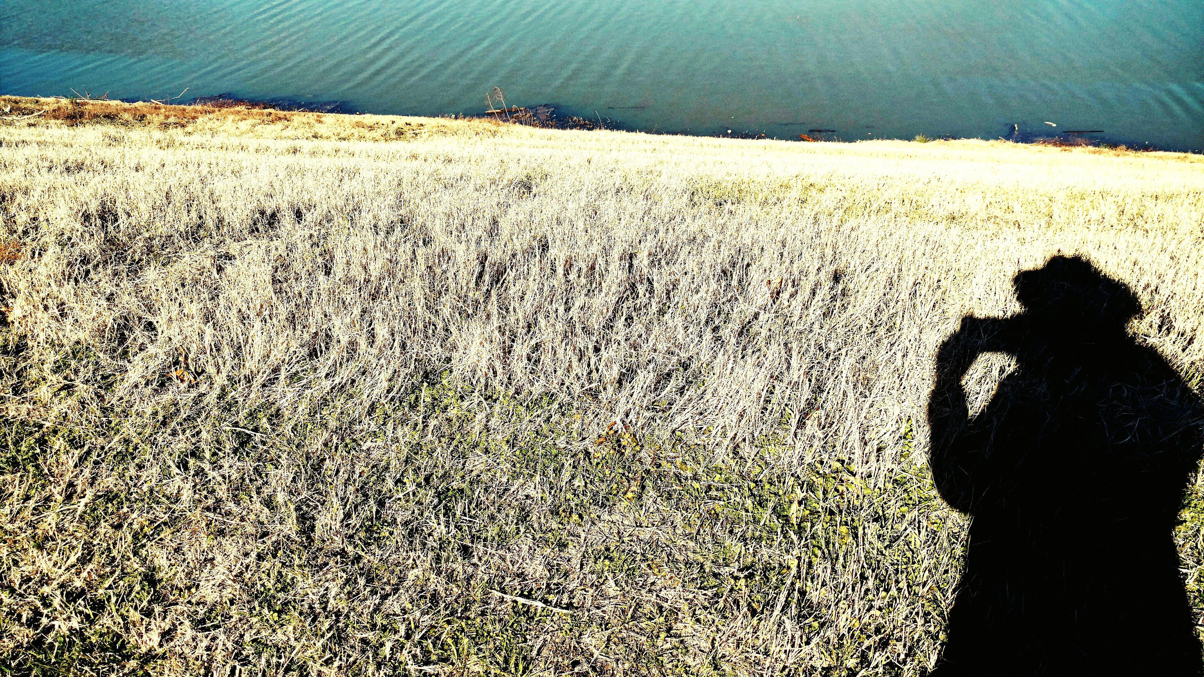 Vincentmoment Sunlight Strawinthesun Full Frame Captured Moment Lonephotographer
