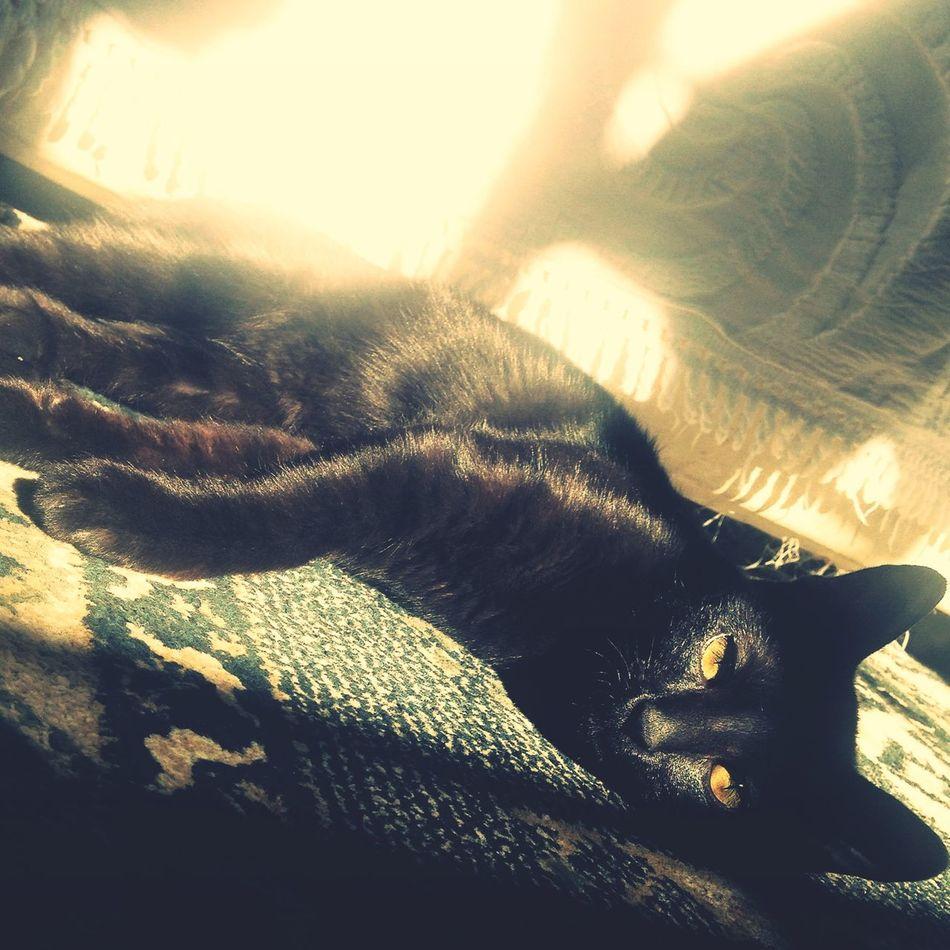 Loveanimals❤️ BLackCat Cat Bene Brazil Sempreconceito