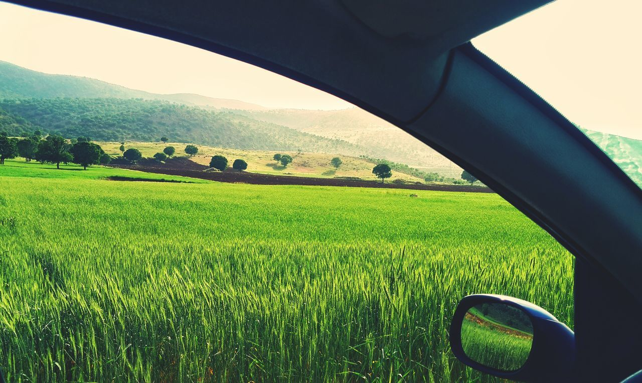 Car Window View Window GreenDay Green Nature Natureporn Adapted To The City Outdoors Vision Outdoorlife Urbanexploration UrbanBeauty Field No People
