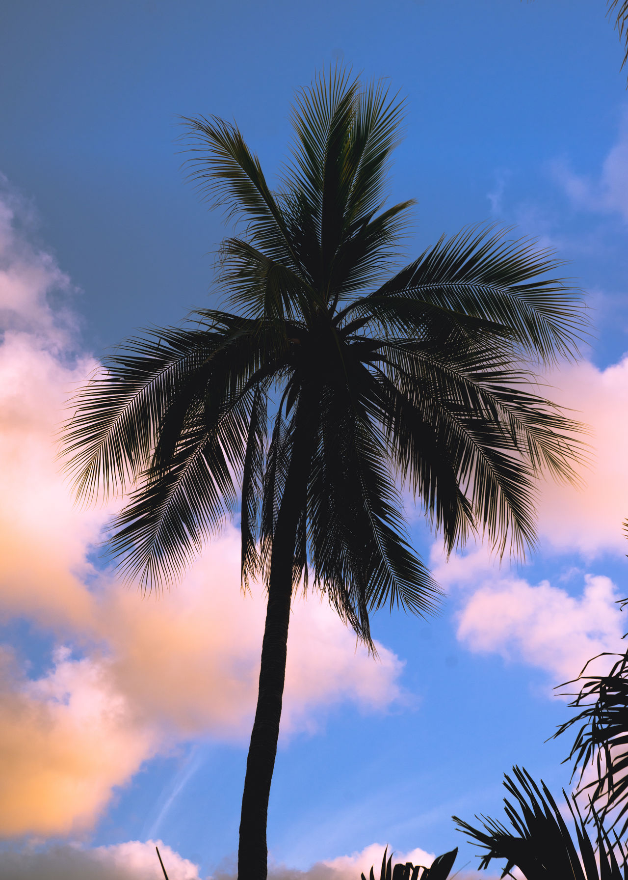 Beauty In Nature Blue Contrast Growth Low Angle View Nature Nature Nature_collection No People Outdoors Palm Tree Palm Tree Scenics Shillouette Sky Summer Summertime Sunset Sunset Silhouettes Sunset_collection Tranquility Travel Travel Photography Tree Tree Trunk