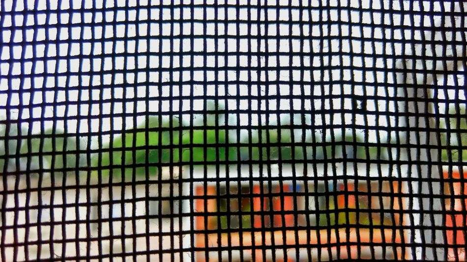 Foreground focus. Sector 15 Chandigarh. Window Window Full Frame Close-up In A Row Focus On Foreground Repetition Nature Multi Colored Colorful Tall No People Beauty In Nature Scenics