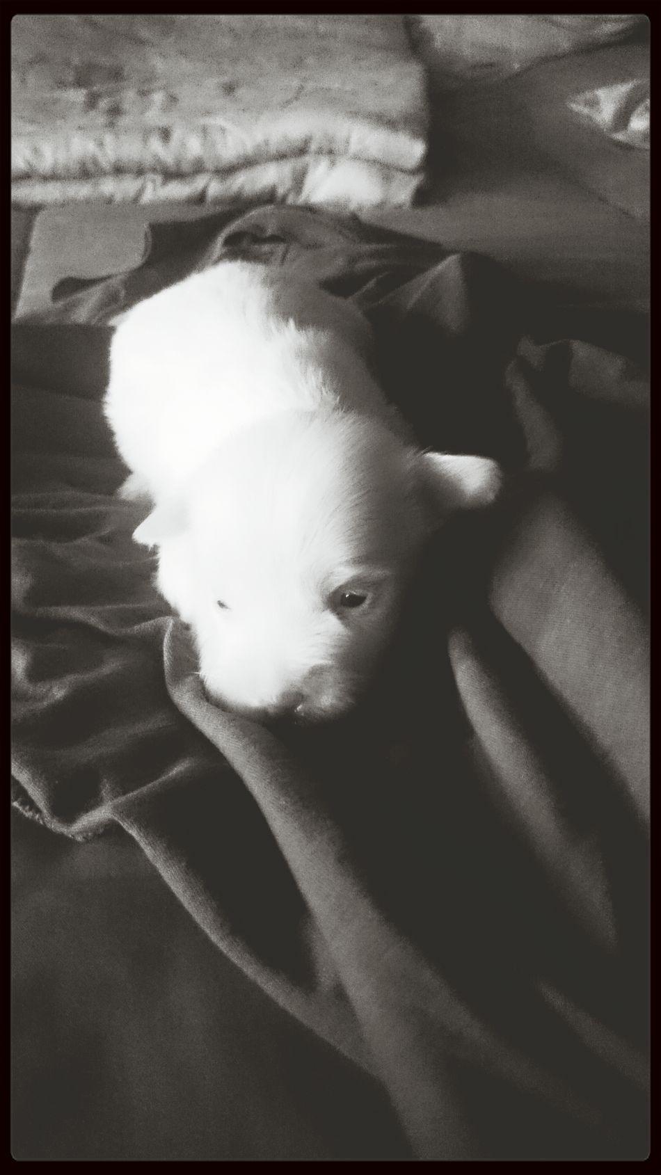 my puppy ?? Puppy Love Cute Small