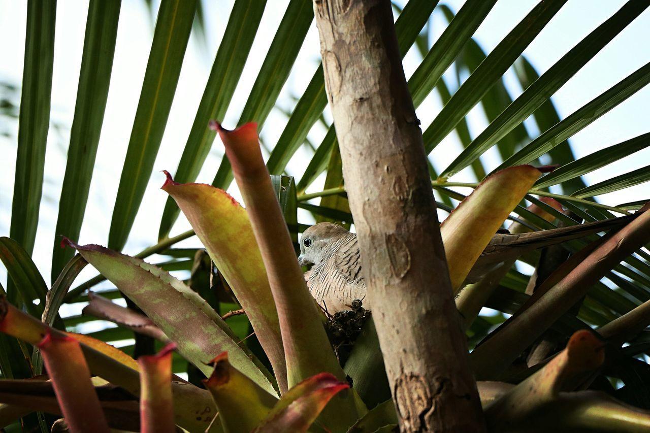 Beautiful stock photos of friedenstaube, tree, day, growth, no people