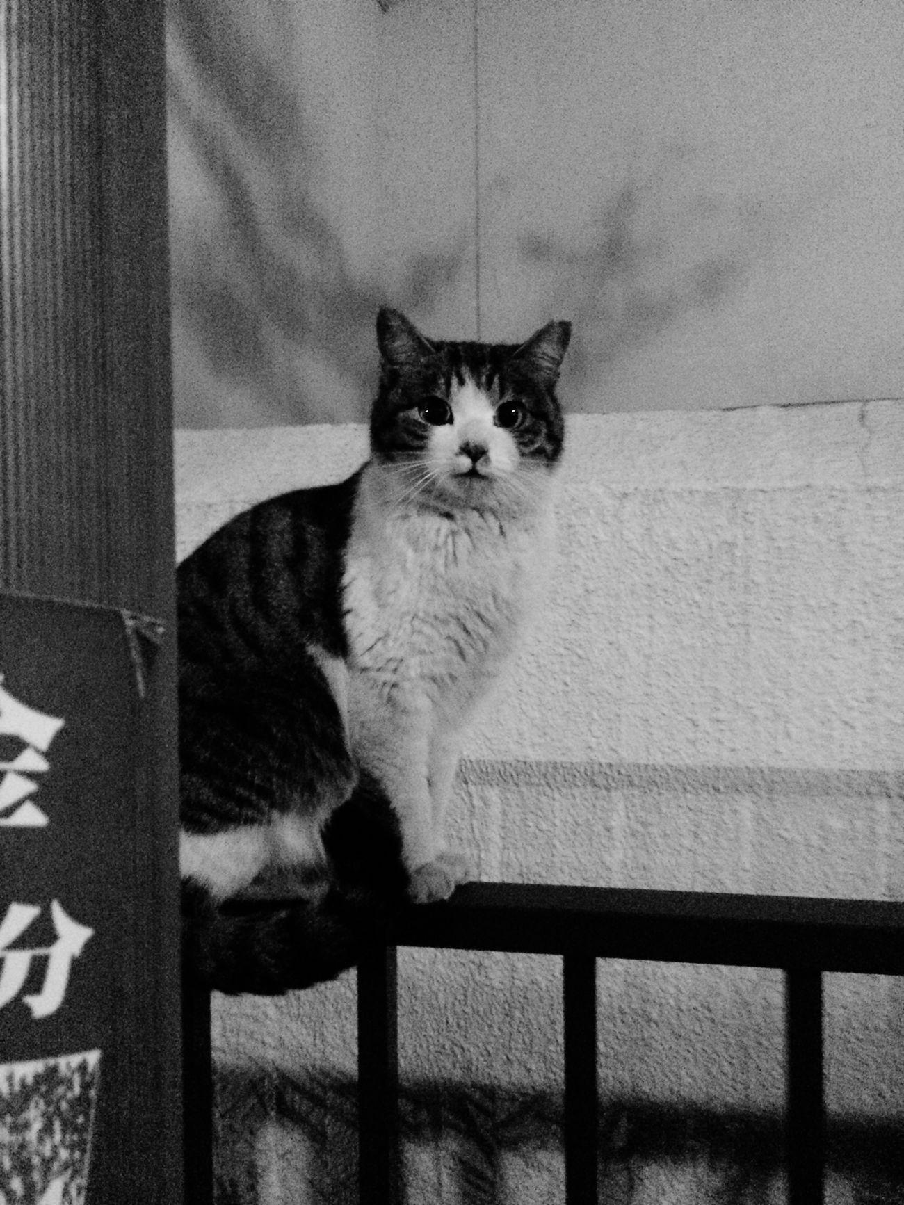 野良猫 Cats Street Cats Black And White Streetphotography
