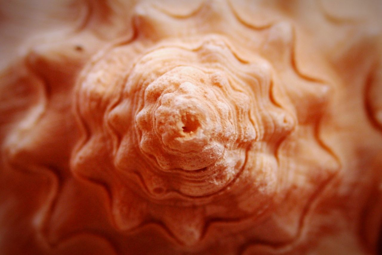 Beautiful stock photos of texture, Animal Shell, Backgrounds, Circle, Close-Up