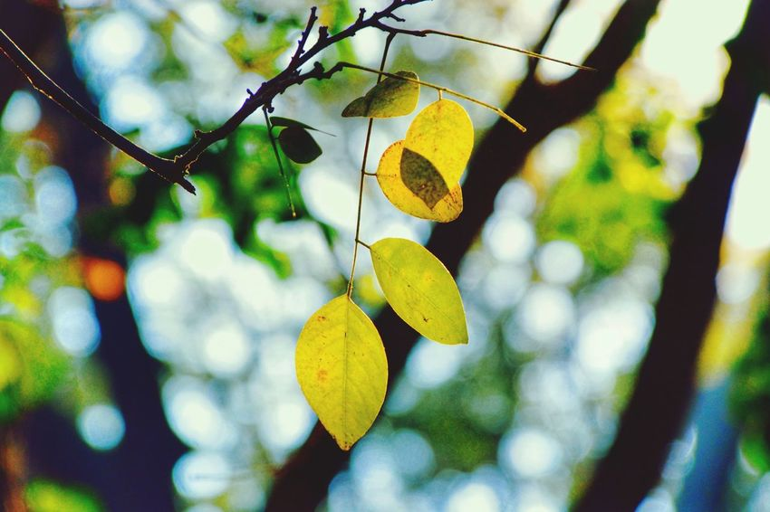 Leaf Bangalore Morning_Cliks Bokeh Photography EyeEm Nature Lover