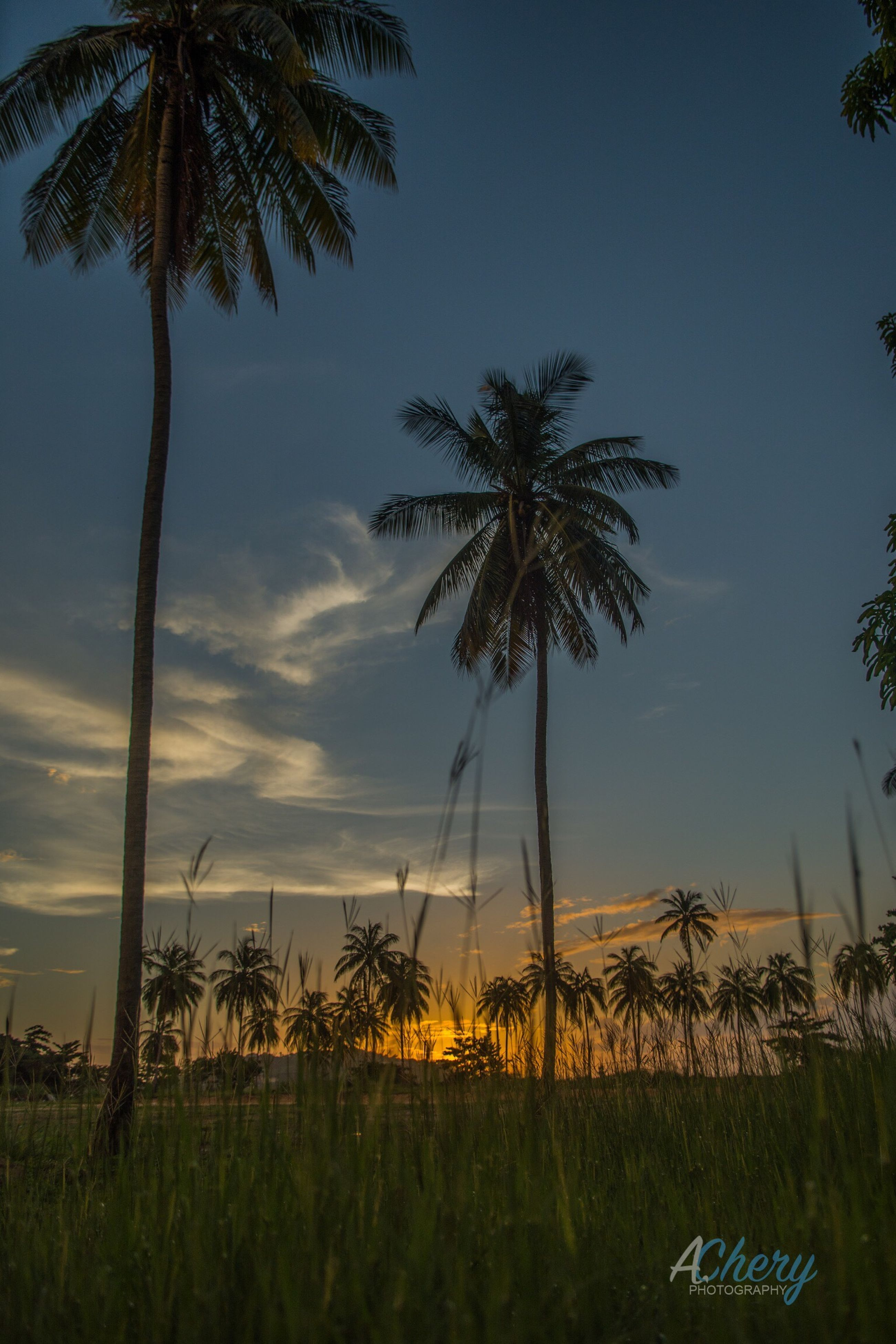 palm tree, tree, growth, sunset, tranquility, sky, nature, tranquil scene, scenics, beauty in nature, outdoors, no people, landscape, day