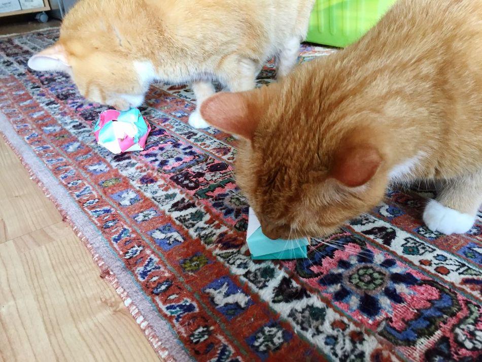 Thinking Cat Cat Toy Katzenleben Katzen 💜 From Myself Close-up Domestic Cat Domestic Animals Indoors