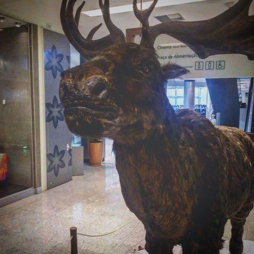 Exposição Gigantes da Era do Gelo - Réplica do Alce em tamanho real. Exhibition Ice Age Giants - Replica of the Moose in full size. First Eyeem Photo
