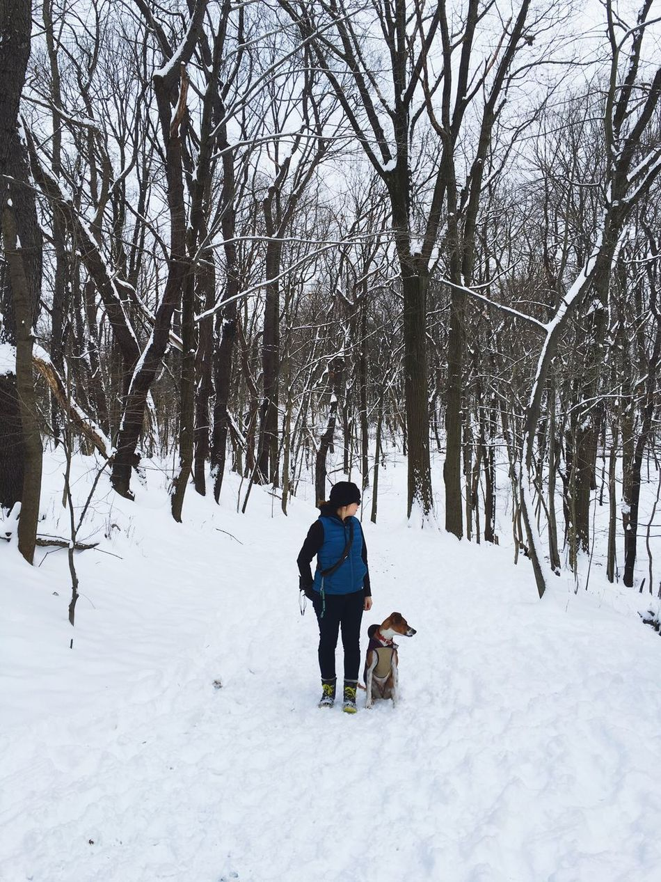 Winter Hiking Snow Dog Family Trees Nature Pittsburgh Park