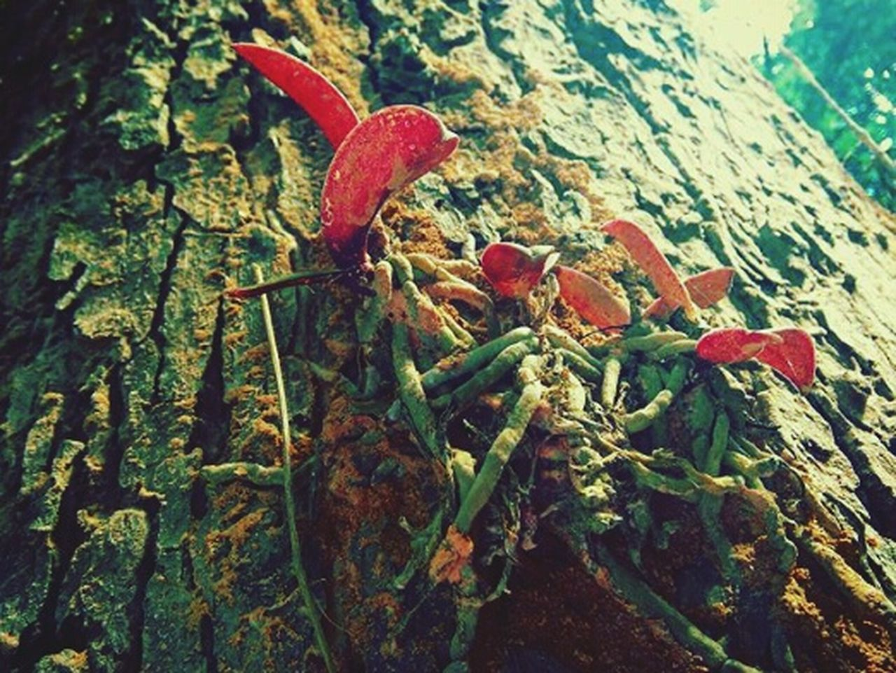 nature, no people, day, close-up, beach, leaf, outdoors, red, beauty in nature, animal themes, undersea