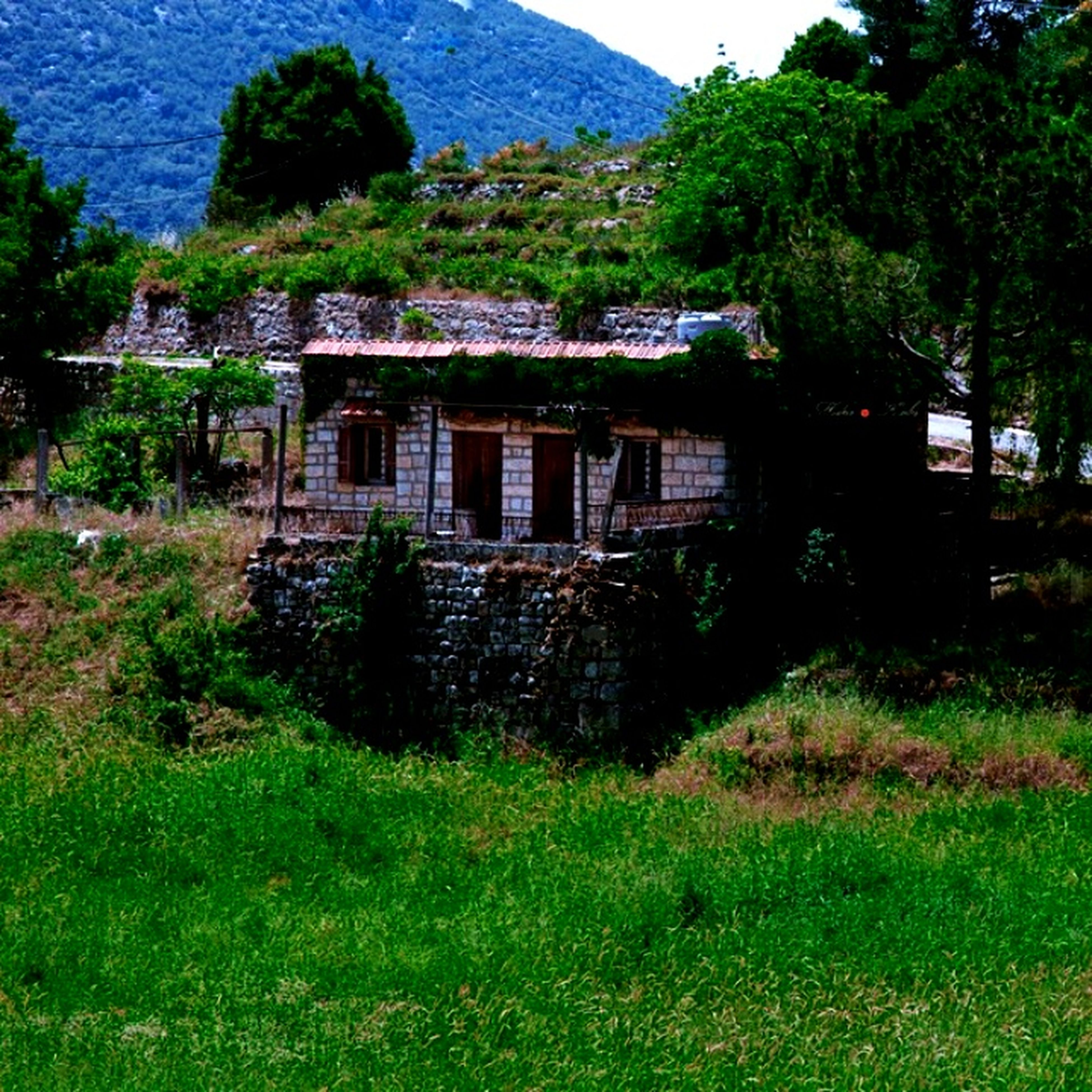 building exterior, built structure, architecture, house, tree, grass, green color, residential structure, growth, mountain, plant, nature, residential building, tranquility, tranquil scene, sky, day, sunlight, landscape, no people