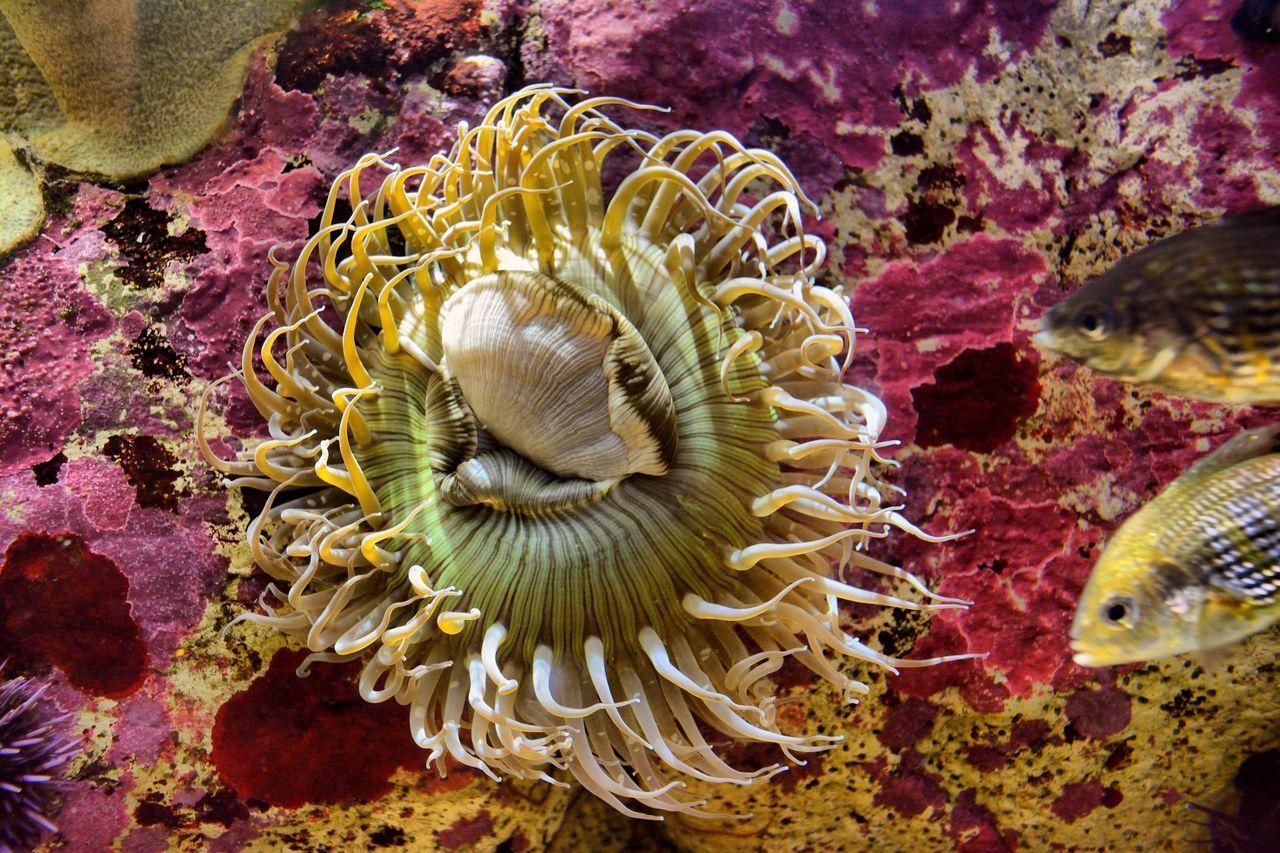 Sea Anemone Monterey Bay Aquarium
