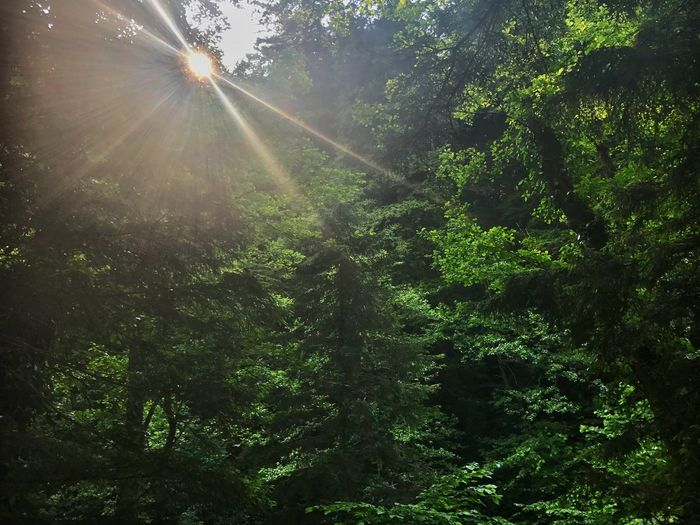 Beauty In Nature No People Water Sunbeam Tree Nature Sun Lens Flare Growth Forest Sunlight Beauty In Nature