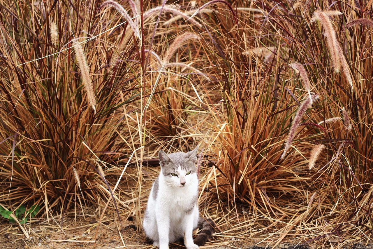Love Kuwait Peace ShaheedPark Nature Outdoors Takenbyme Winter Kuwait City Domestic Cat Looking At Camera One Animal Pets Mammal No People Animal Themes Portrait