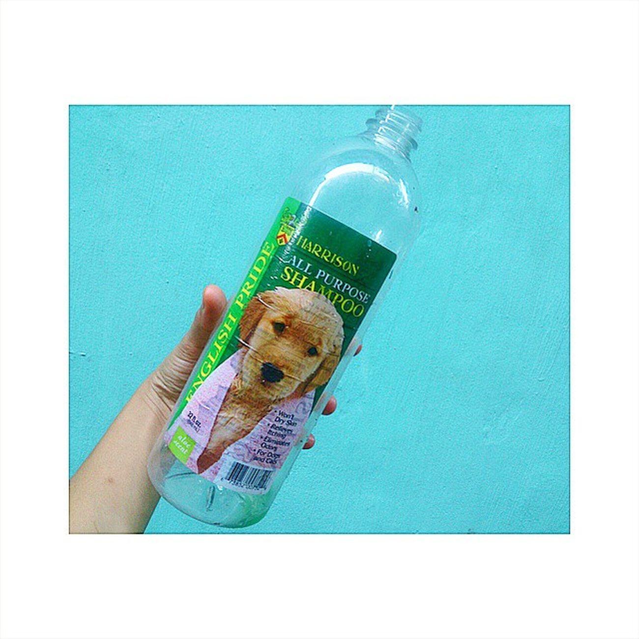 Aw. No more shampoo for Kobe . Ang kapal kasi ng Fur eh. Bilis maubos. 😭😭😭 Harrison EnglishPride Dogshampoo ShihTzu KobeBebe ShihTzuProblems