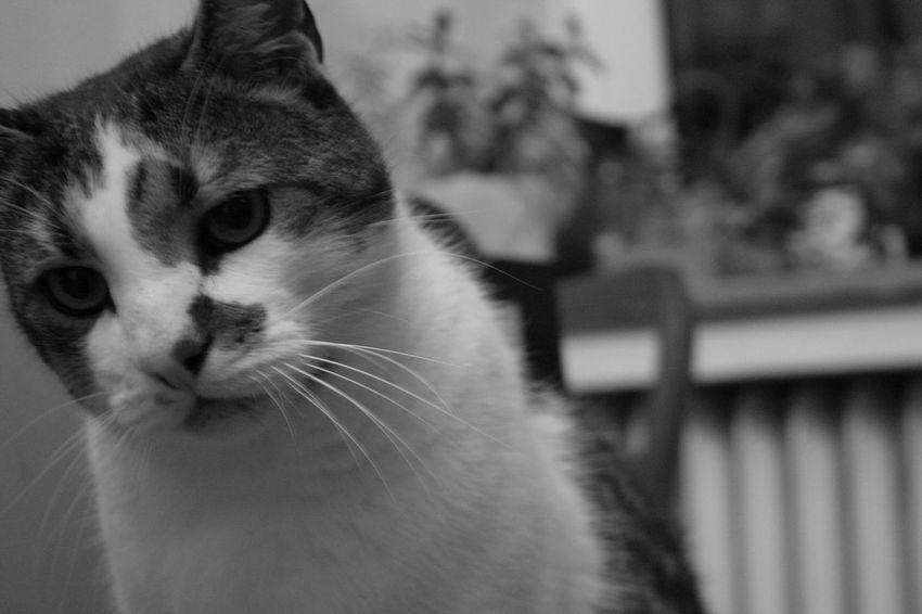 Cats Of EyeEm EyeEm Best Shots - Black + White Eyeem Market Cat Eyem Cute Cats Animal Photography EyEm Animal Lover Blackandwhite Photography Eyem Gallery Cute Cat Black And White Portrait
