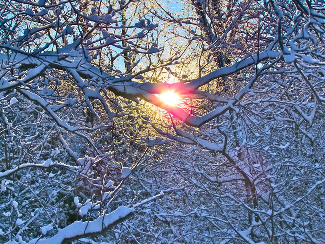 Bare Tree Beautiful Nature Beautyinnature  Branch Brandnewday Change Cold Temperature Glowing Lens Flare Light Low Angle View Mystery Newday Outdoors Season  Shine Silhouette SunInWinter Tranquility Tree Tree Trunk Twig Winter