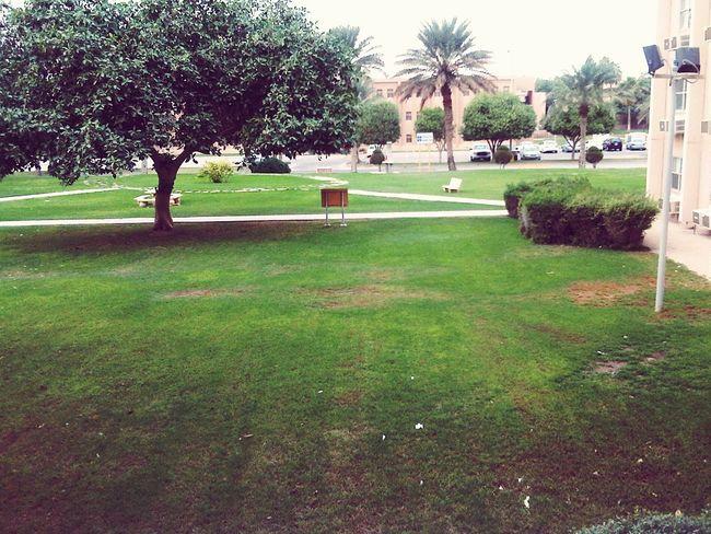 Farha camp in Abqaiq Park Mobilephotography