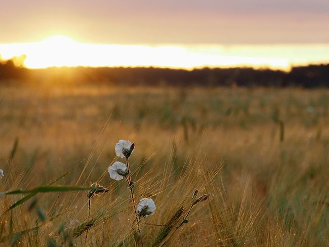 Sunrise Nature Sunset Field Grass Animals In The Wild Outdoors No People Beauty In Nature One Animal Growth Plant Animal Themes Bird Sky Day Mammal Close-up